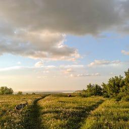 A grassy meadow.