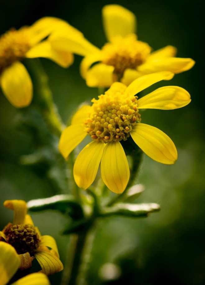 Yellow flowers.